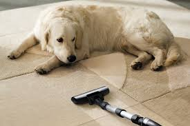 images 1 5 House Cleaning Tips for People with Dogs and Cats
