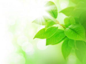 spring green leaves border 12568622 300x225 spring green leaves border 12568622